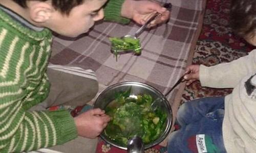 Người Syria ăn cây cỏ để chống đói qua ngày
